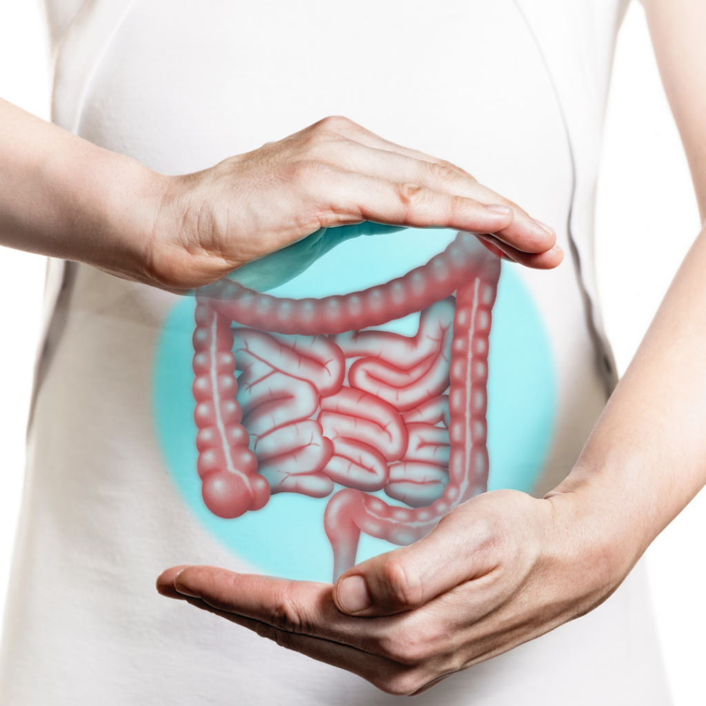 Gut and digestive system image